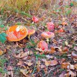 paddestoelen herfst